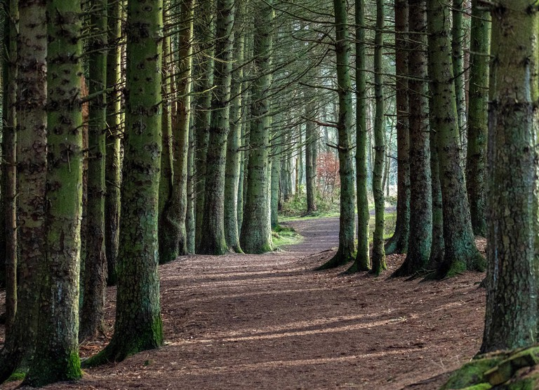 Forest path in Beecraigs country park, West Lothian, Scotland