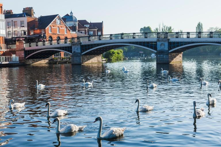 England, Berkshire, Windsor, Swans and Windsor Town Bridge
