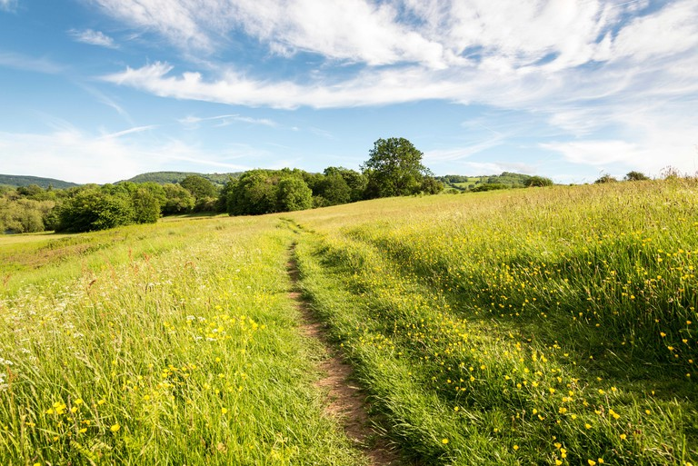 A path across the Warren, a meadow, at Hay-On-Wye, on a sunny afternoon with wispy white clouds in a blue sky. Wild flowers are in the foreground.