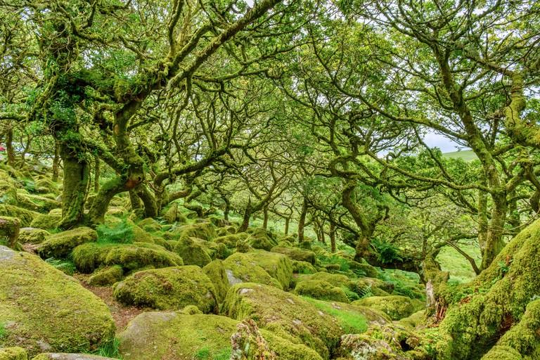 Wistman's Wood, Dartmoor, Devon