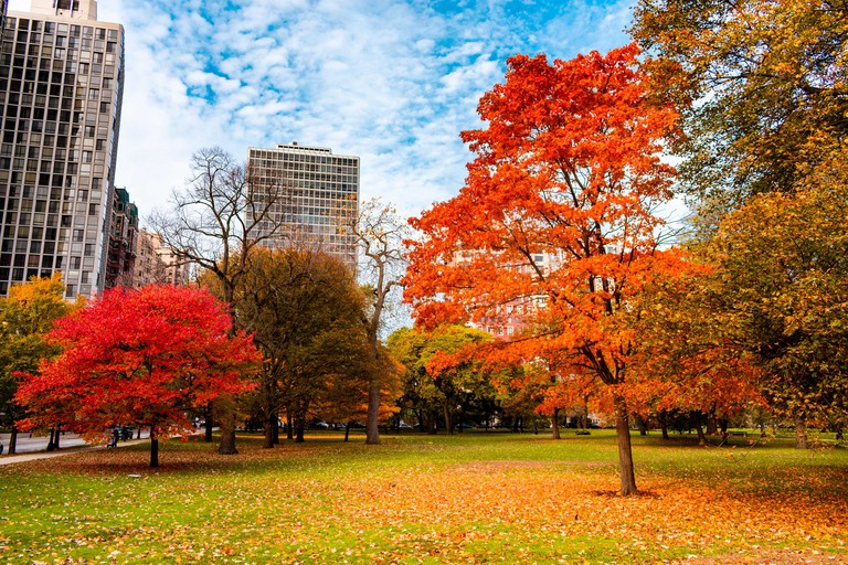 Colorful Autumn Scene in Lincoln Park Chicago