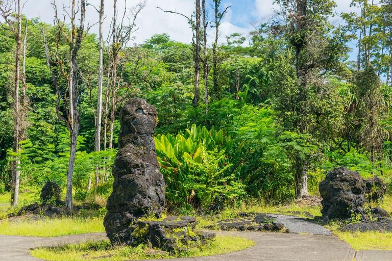 USA, Hawaii, Big Island, Lava Tree State Monument