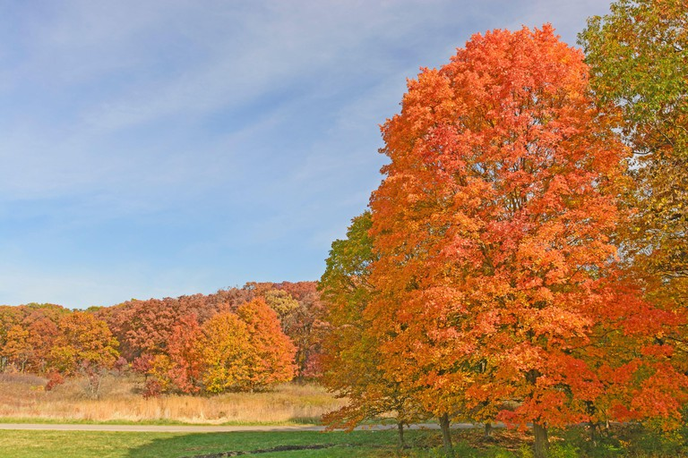 Colorful Landscape in the Fall in Morton Arboretum in Lisle, Illinois