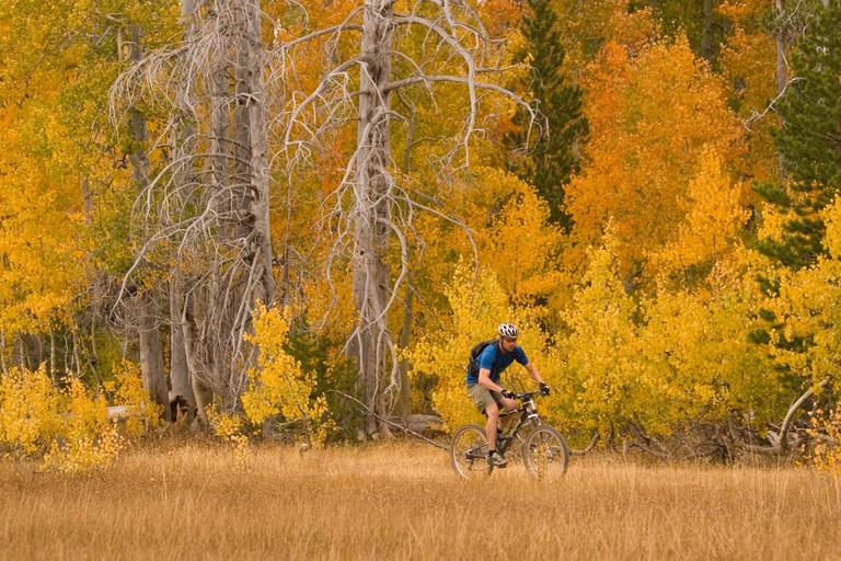 A man mountain biking past yellow aspens in Page Meadows near Tahoe City California