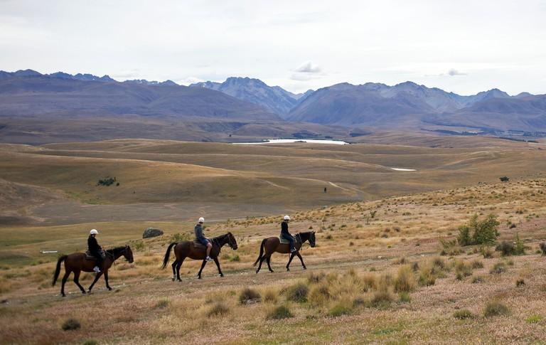 Horse trekking on top of Mount John overlooking Lake Tekapo and the Mackenzie Country, South Island, New Zealand.. Image shot 2011. Exact date unknown.