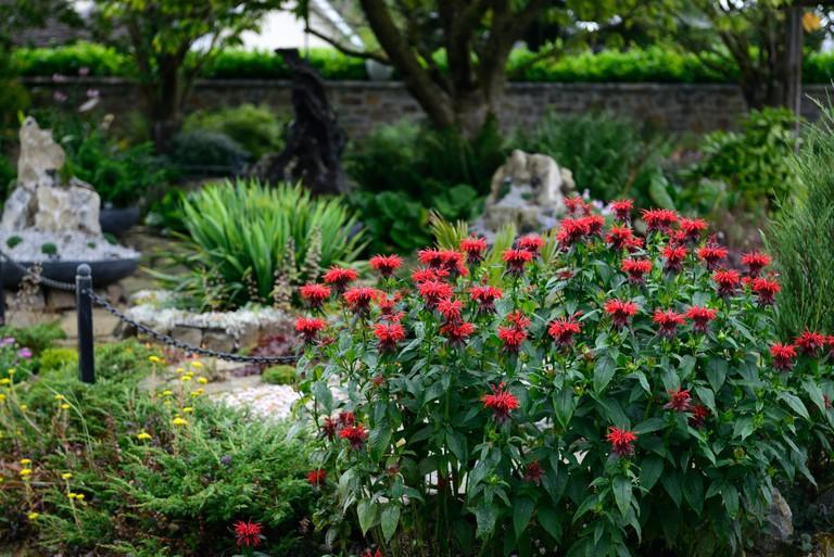 monarda, perennial, display, coolwater garden,Fedamore,Co  Limerick,RM Floral