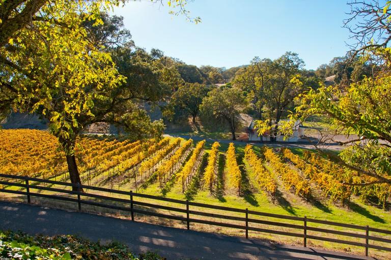Scenic vineyards wine country