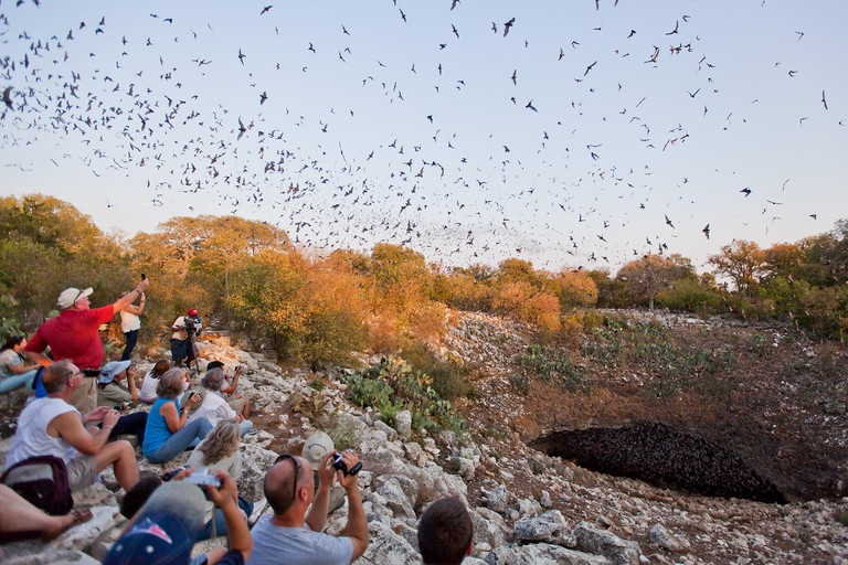 Aug 27, 2011 - San Antonio, Texas, U.S. - Bracken Bat Cave is the summer home of the world's largest bat colony. With millions of Mexican free-tailed bats living in the cave from March thru October, Bracken holds one of the largest concentration of mammal