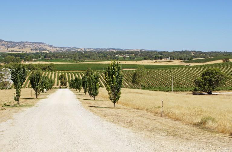 Landscape of Barossa Valley, Australia