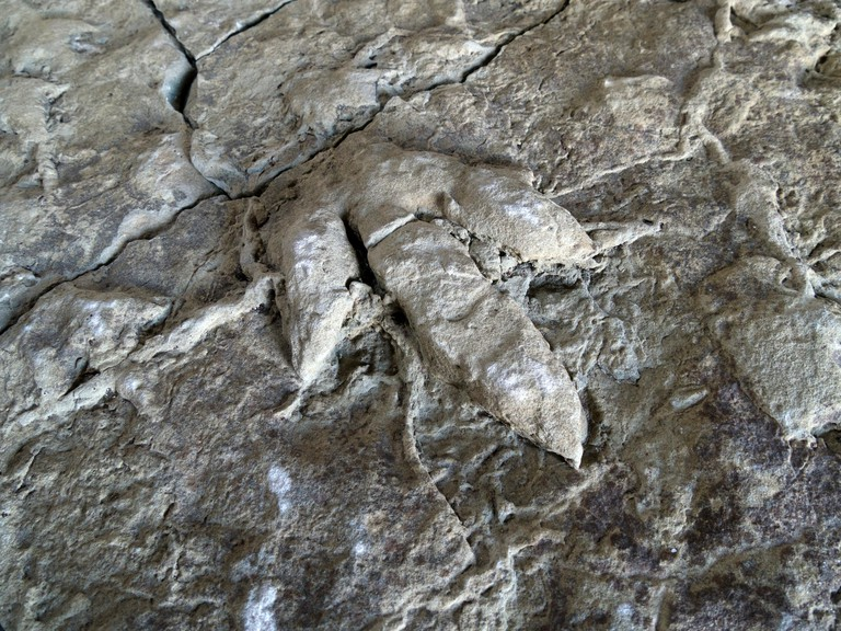 Fossilised adult & young ornithopod dinosaur footprints found in rock slab on Skye and now in Staffin Dinosaur museum, Isle of Skye, Scotland, UK