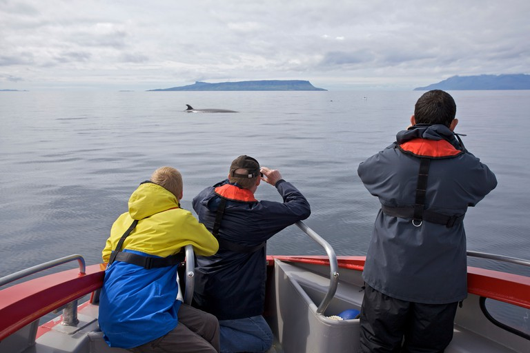 Whale watchers on a boat in the Isle of Skye, Scotland