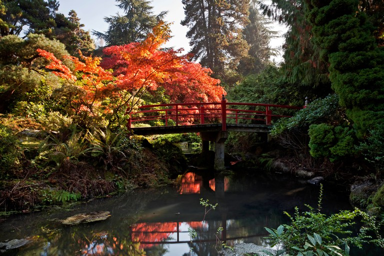 WASHINGTON - Autumn color at Heart Bridge Kubota Garden in Seattle.