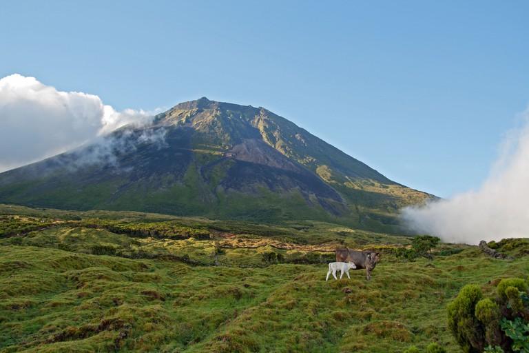View of Mount Pico