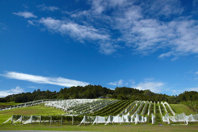 Ascension Wine Estate, Matakana, North Auckland, North Island, New Zealand