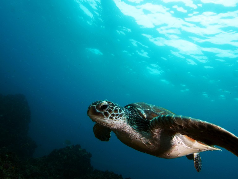 Sea Turtle Green Turtle Julian Rocks Byron Bay