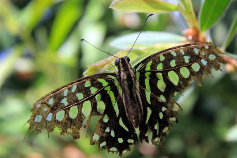 Butterfly at Butterfly Wonderland, Scottsdale, AZ.