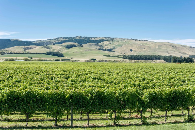The Crater Rim Winery vineyards, Waipara, North Canterbury, Canterbury Region, New Zealand