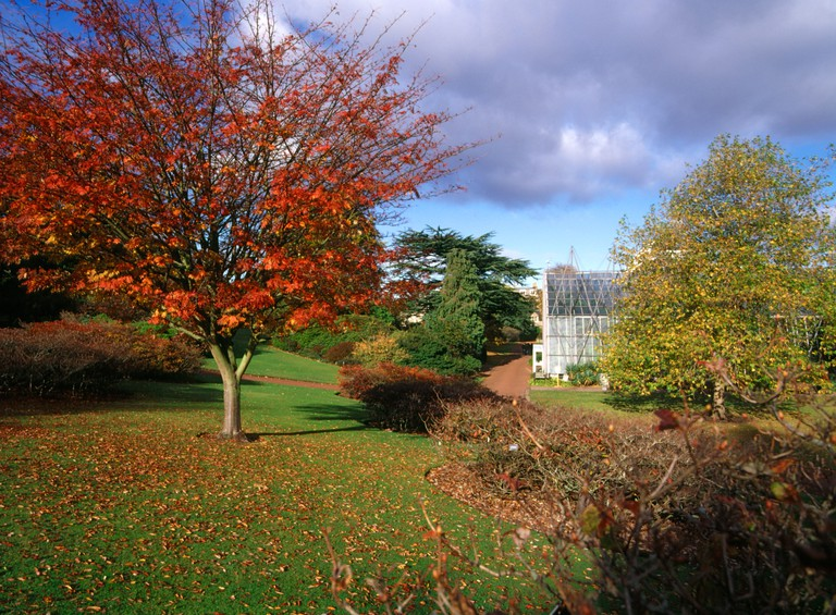 dh  ROYAL BOTANIC GARDEN EDINBURGH Red autumn leaves tree and Glasshouse botanical gardens park