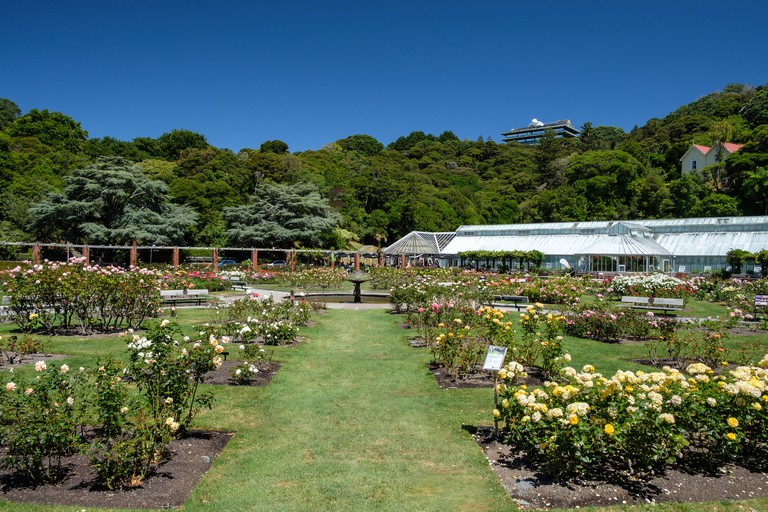 Wellington Botanic Gardens,  Wellington, North Island, New Zealand