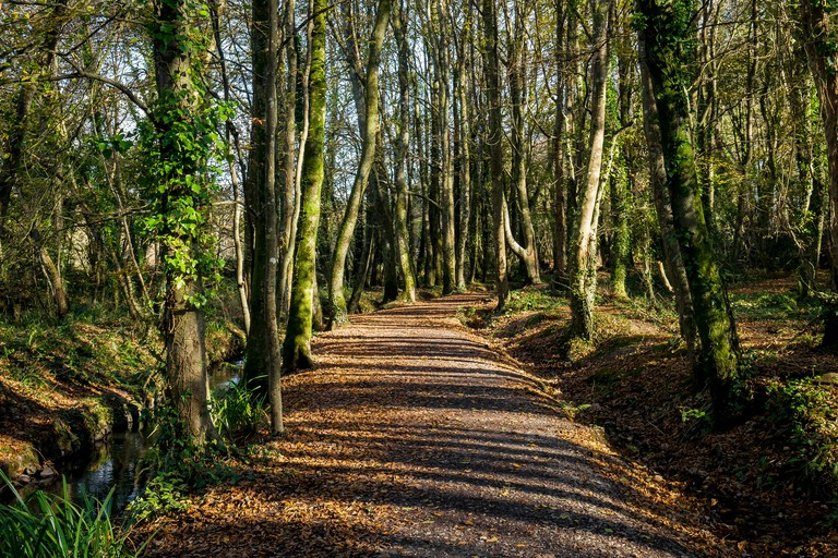 A sunny autumn day in Tehidy Country Park Cornwall UK.