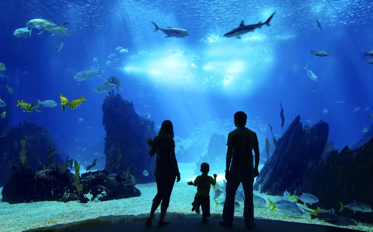 Underwater family. Cairns Aquarium has plenty of marine attractions to wow the whole family.