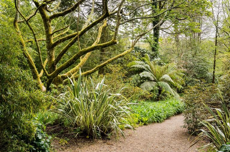 Trengwainton Garden, Cornwall, UK