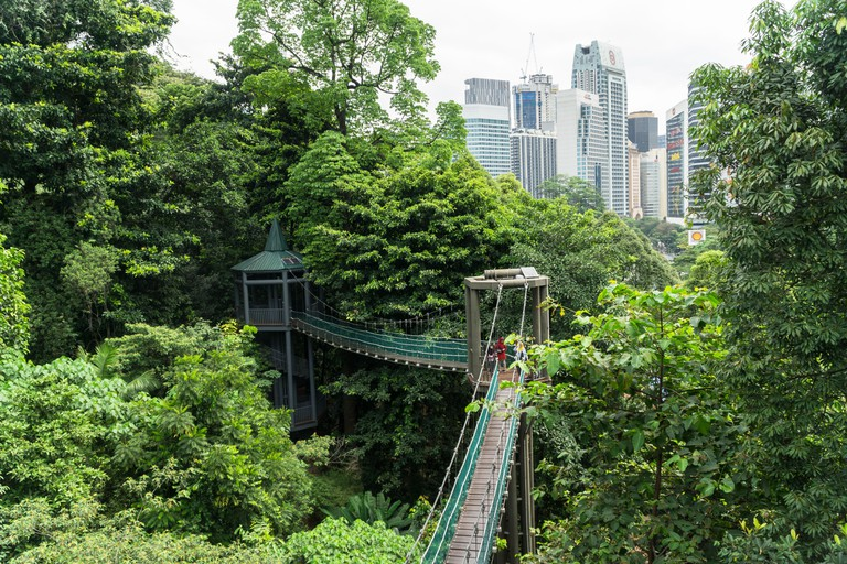 KL forest eco park view