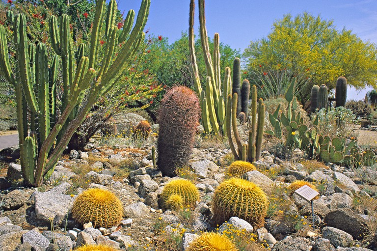 cactus garden at The Living Desert in Palm Springs California