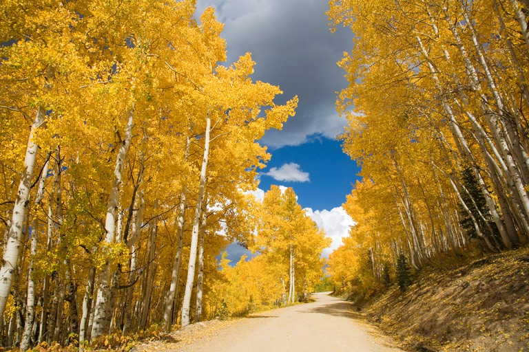 Colorado, Near Steamboat Springs, Buffalo Pass, Road Winding Through Fall-Colored Aspens.