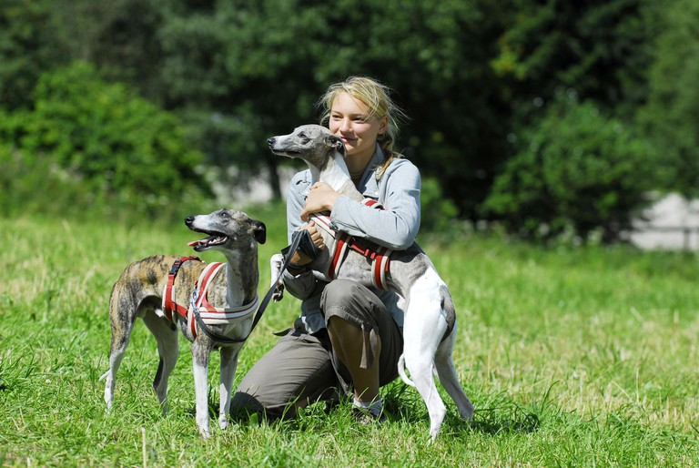 woman and whippets