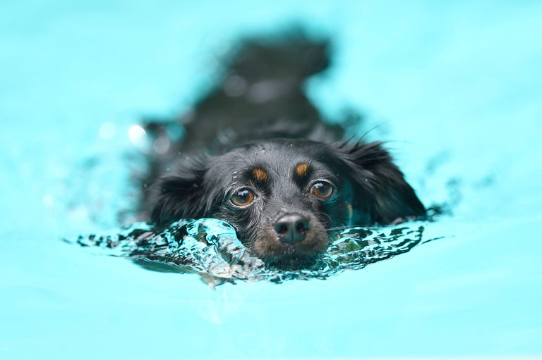 Mixed breed dog swimming in a pool