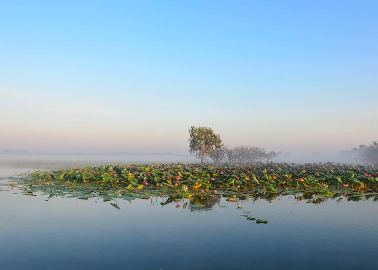 Sunrise Cruise, Yellow Water Billabong, Kakadu National Park, Northern Territory, NT, Australia
