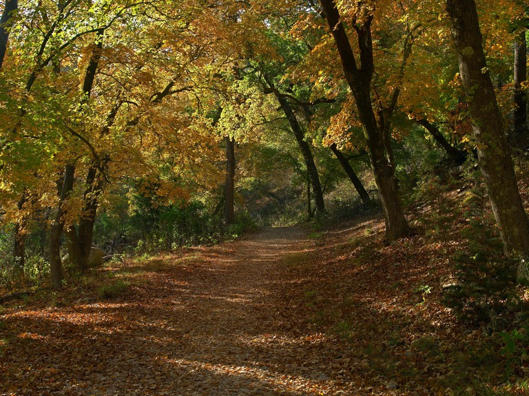 Forest in autumn colors, Lost Maples State Natural Area, Texas