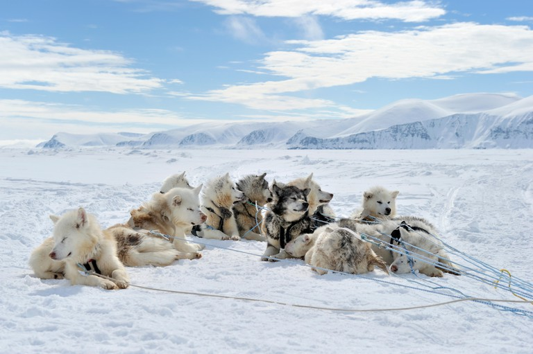 Group of Husky sled dogs resting on the sea ice, Baffin bay, Nunavut, Canada.