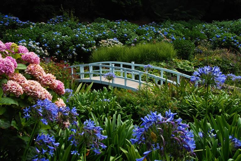 White bridge in the hydrangea valley of Trebah Garden, Cornwall, United Kingdom