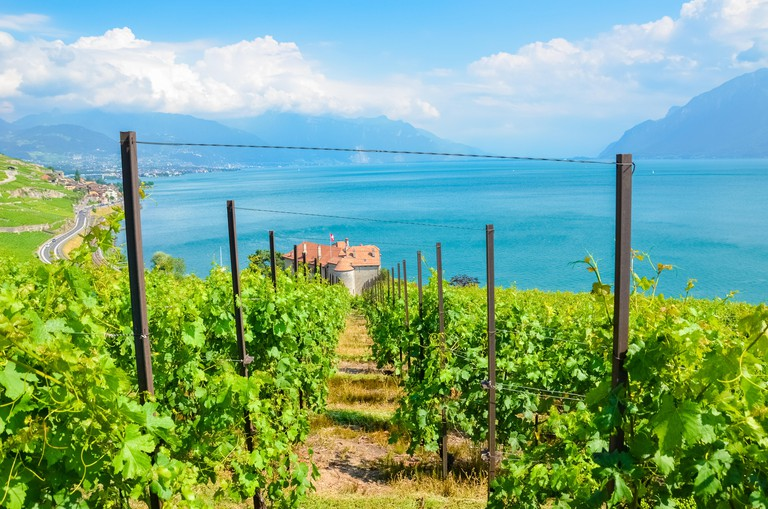 Beautiful green vineyards on slopes by Geneva Lake, Switzerland. Lavaux wine region. Switzerland summer. Swiss landscape. Turquoise water of the famous lake. Popular travel destination.