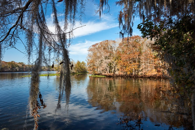 Suwannee River at Manatee Springs State Park, Florida
