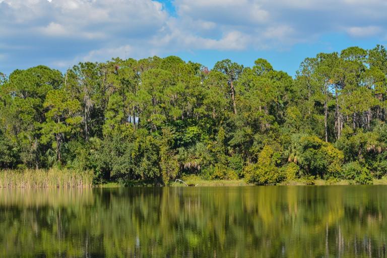 Beautiful view at Lake Seminole, Seminole, Florida