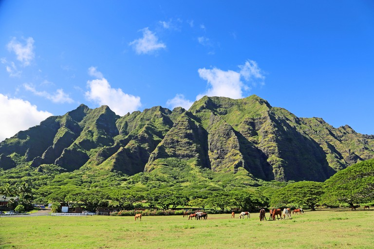 Horses on Kualoa Ranch - Oahu, Hawaii