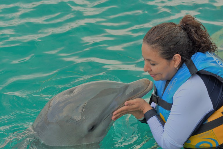 meeting dolphins up close