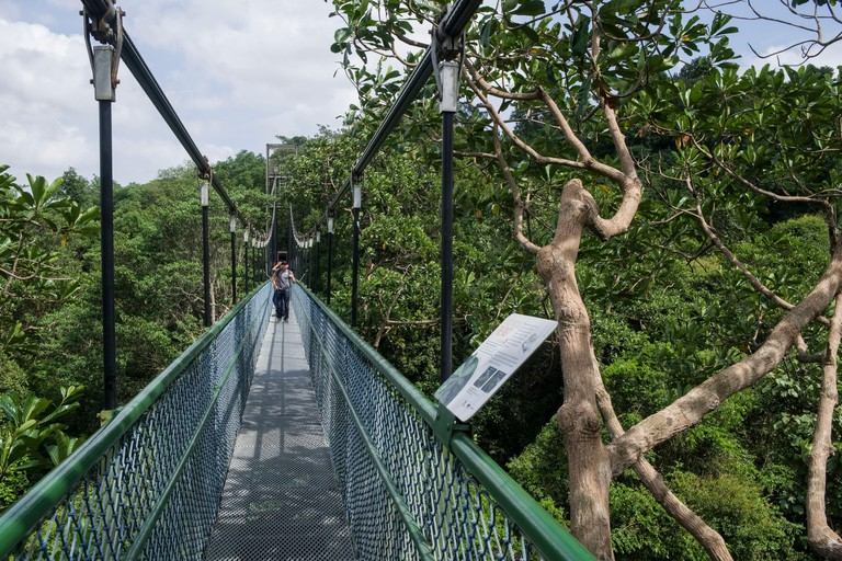 Singapore, Asia: Tree Top Walk, pedestrian bridge above the canopy in MacRitchie Reservoir Park