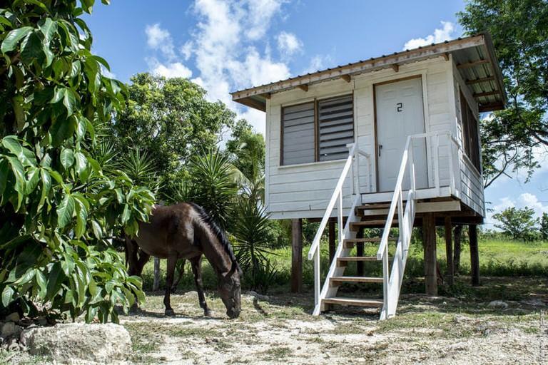 Wild Horse Cottage