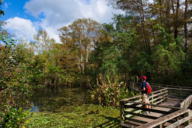 Birdwatcher on the boardwalk in the National Audubon Society's Corkscrew Swamp Sanctuary, near Naples, Gulf Coast, Florida, USA