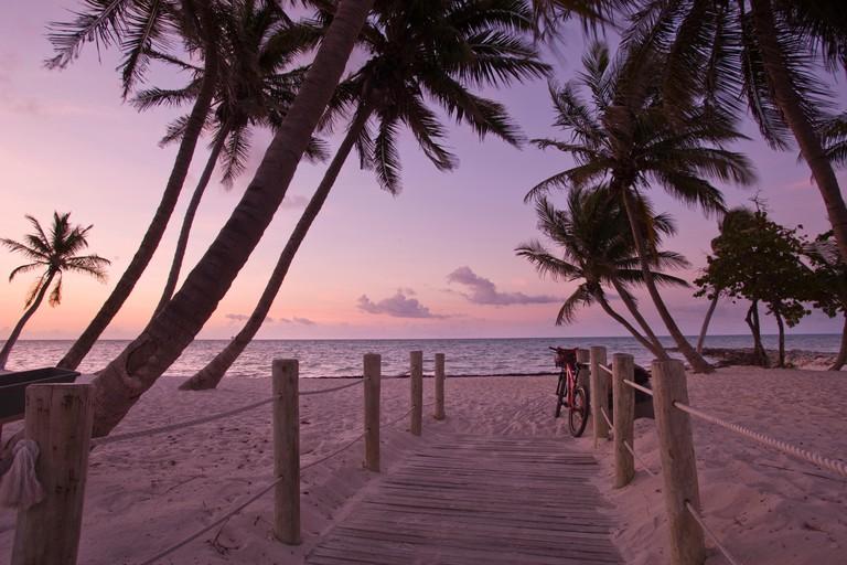 PALM TREES SMATHERS BEACH KEY WEST FLORIDA USA