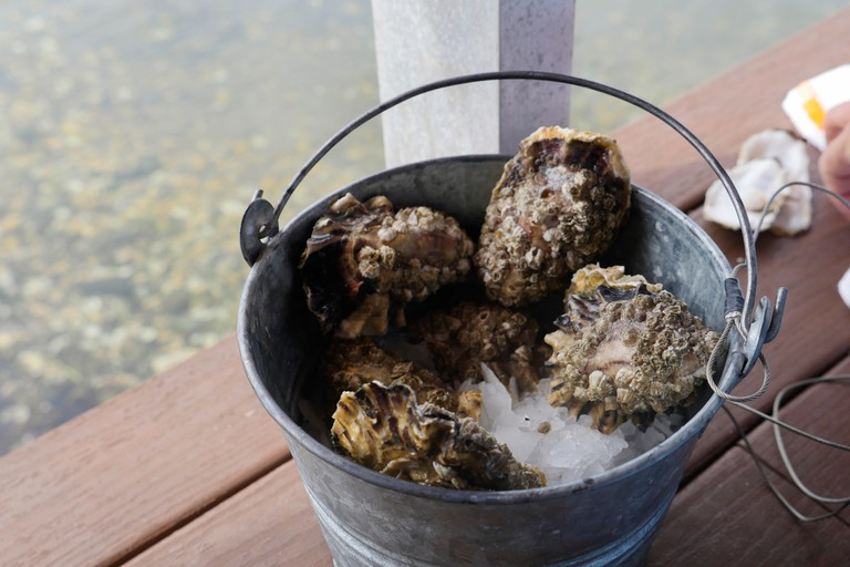 Oyster, Taylor Shellfish Samish Farm Store, San Juan Islands, Puget Sound, Washington State