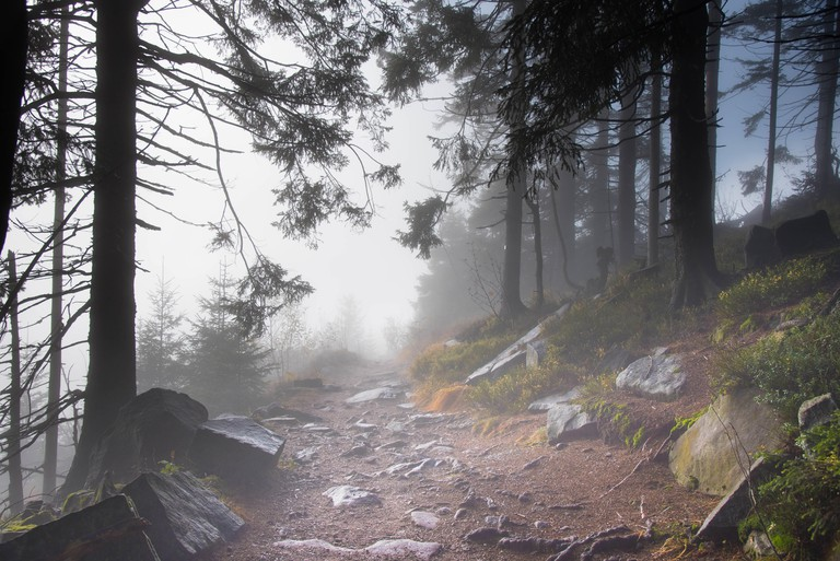 autumn forest on the top of the Hornisgrinde in the north of the black forest in germany
