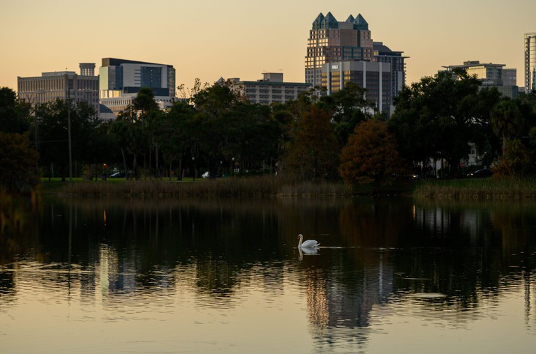 A swan swims at Lake Davis Park with part of the Orlando, Florida downtown skyline in the background.