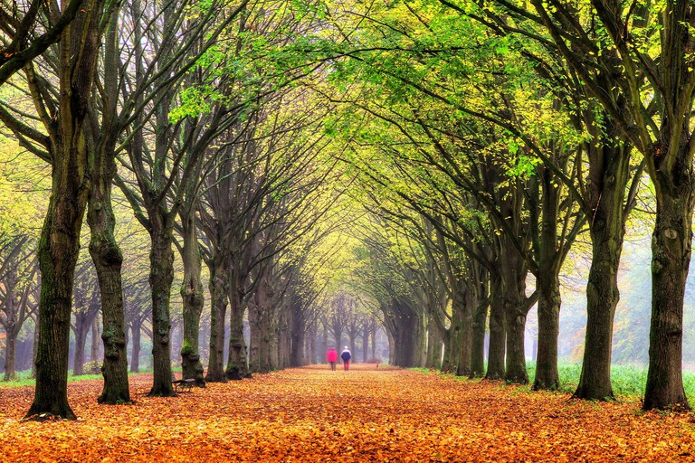Elderly couple walking in the forest in autumn in het Amsterdamse bos Amsterdam wood in the Netherlands HDR