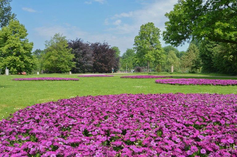Flowers At The Amstelpark Amsterdam The Netherlands 2018