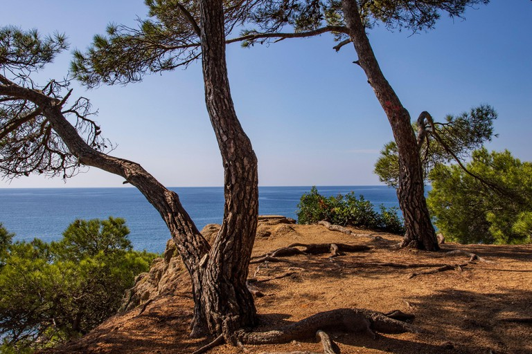 The GR92 coastal path that runs through pine forest near Lloret de Mar on the Costa Brava, Spain